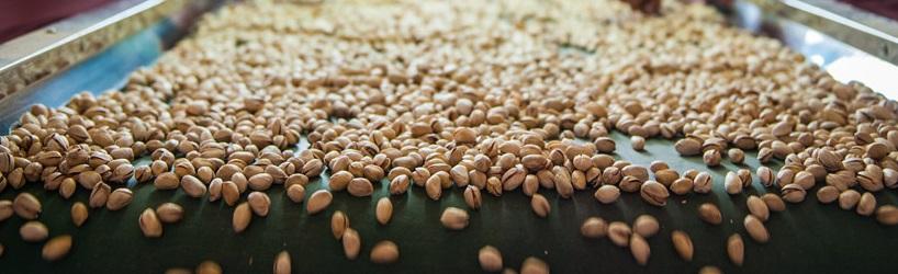 pistachio exporters