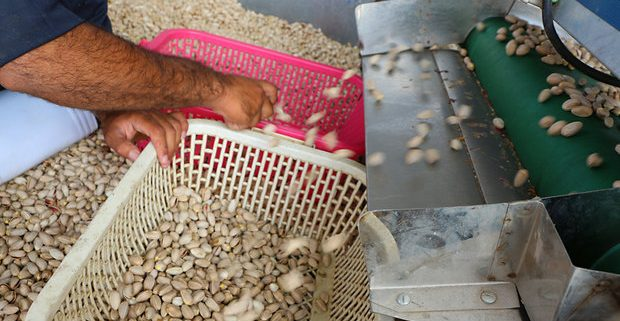 rafsanjan pistachio suppliers