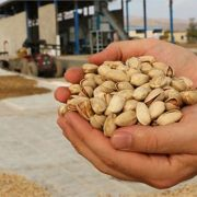 Iranian pistachio exporters