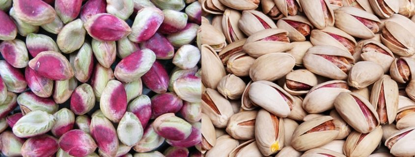 Aflatoxins Level in Persian Pistachios