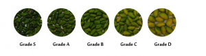 Green Peeled Pistachio Kernels - Anata Nuts Co.