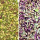 Bulk buy pistachio nuts kernels for ice cream