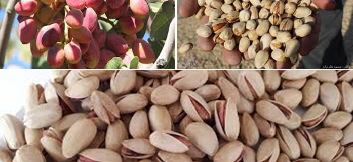 biggest pistachio producer in the world