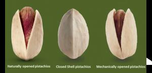 TGDP (Anata Nuts) co.