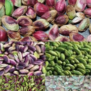 buy pistachio kernels price