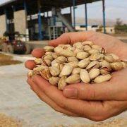 pistachio wholesale price in iran