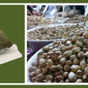 buy pistachio nuts in bulk & packaged