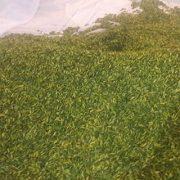 buy pistachio slivers price