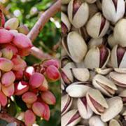 iranian pistachios toronto