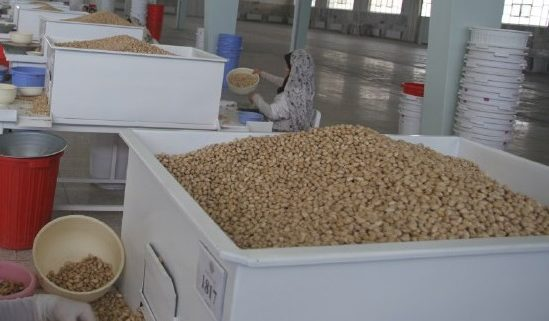 largest producer and exporter of pistachios