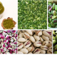 pistachio seeds for sale in bulk