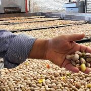iran pistachio Rafsanjani