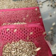 buy pistachio nuts in bulk uk