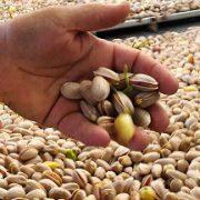 Bulk buy shelled pistachios online
