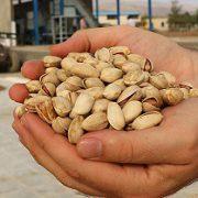 Wholesale pistachio best price
