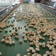 aflatoxin on pistachios for sale