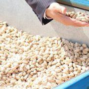 buy raw pistachios online