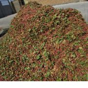 iranian pistachio nuts export