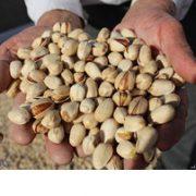 pistachio nuts best price