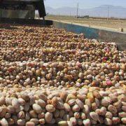 pistachio nuts wholesale price in iran