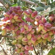 pistachios for sale uk