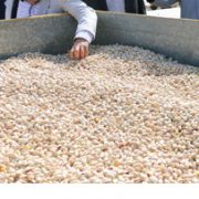 price of pistachio in turkey country