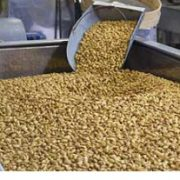 raw shelled pistachios for sale