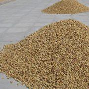 wholesale pistachio nuts online