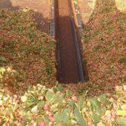 wholesale pistachio price in iran 2017