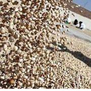 wholesale pistachio suppliers in uae