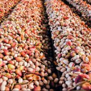 cheapest place to buy pistachio nuts