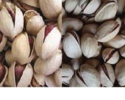 bulk Persian pistachio wholesalers