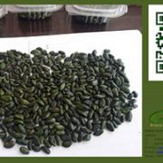 green peeled pistachios for sale
