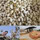 import pistachio australia