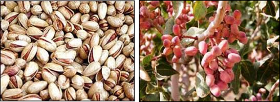 organic unsalted pistachios sale