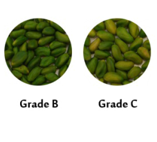 pistachio kernels bulk buy
