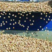bulk pistachios cheap
