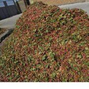 buy pistachio wholesale in iran