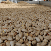 buy shelled pistachios bulk