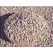 buy shelled pistachios in bulk