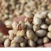 iranian pistachio price