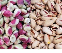 persian pistachio trading in the world