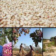pistachio price per tonne