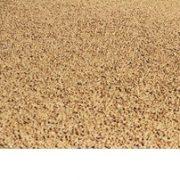 shelled pistachios bulk