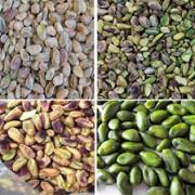 unsalted pistachio kernels bulk