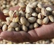 wholesale pistachios sale online