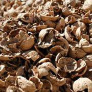 bulk walnut shells for sale
