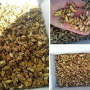 small walnut kernel